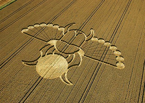 Crop circle insect
